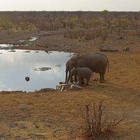 Намибия.На закате. :: Михаил Рогожин