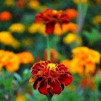 Осень радовала нас цветами и красками. :: *MIRA* **