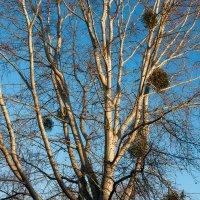 Дерево :: Ольга Барчан