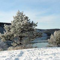 Зима :: Оксана Н