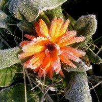 снежный цветок :: Mariya laimite
