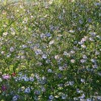 городские цветы-россыпь :: Олег Лукьянов