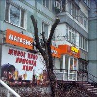 Ободрали, как липку :: Нина Корешкова