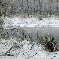 Октябрьский снег. :: Инна Щелокова