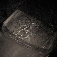авто-лес2 :: Дмитрий Потапов