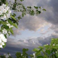 Яблони в цвету :: Natalia