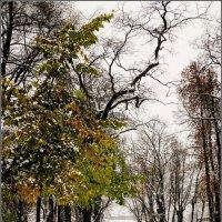 Зима пришла неожиданно :: Galina Belugina