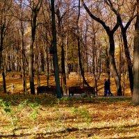 осенний парк Гомеля 2 :: Александр Прокудин