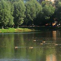 На озере летом :: Елена Семигина