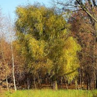 В Ашманн парке в ноябре :: Маргарита Батырева