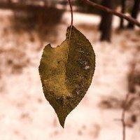 Осенняя память :: Елена Фалилеева-Диомидова