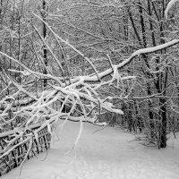 Этюд из зимы :: Сергей Тарабара