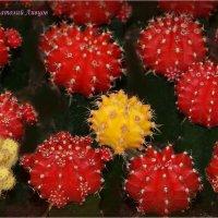 Колючие шарики. :: Anatol Livtsov
