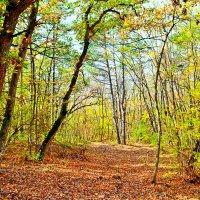Осенний лес :: Виктор Шандыбин