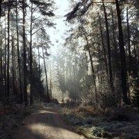 Зимой. в лесу.. :: Эдвард Фогель