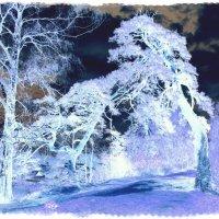 В холодных лабиринтах... :: Андрей Головкин