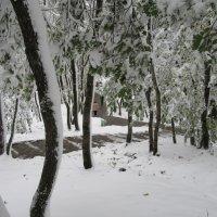 Зима в парках. :: Вячеслав Медведев