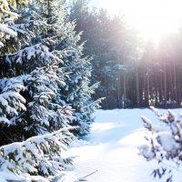 Зима :: Яна