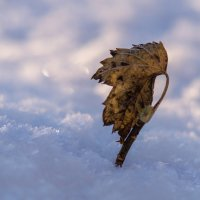 Зимнее одиночество :: Вера Сафонова