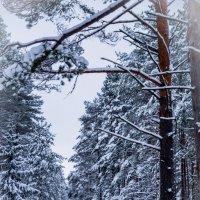 в лесу :: Людмила Сафина