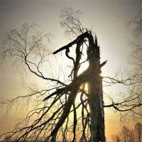 Судьба дерева :: Валерий Талашов