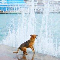каждый день эта собака :: Ярослав Мунин