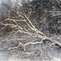 После снегопада :: Наталья