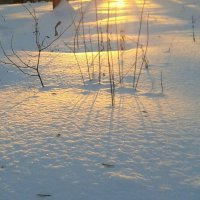 Мороз и солнце. :: наталия