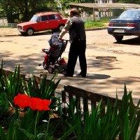 Дедушкины заботы :: Нина Корешкова
