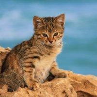 Приморские котята :: Николай Волков