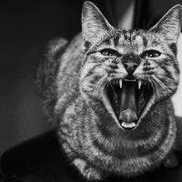 """Улыбка """"будущего тигра""""...., или """"""""хотите зубы покажу?)... :: Арина"""
