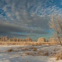 Хороший зимний день :: Сергей Герасимов