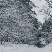 Зима :: Александр Ребров