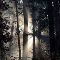 солнце в лесу 2 :: Сергей Короленко