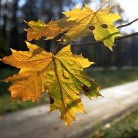 Еще вчера, на солнце млея, дрожал от ветра желтый лист. :: Инна Щелокова