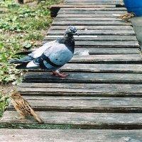 Птичьи посиделки :: Сергей Тарабара