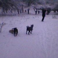 Зима :: Миша Любчик