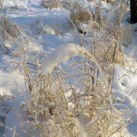 Пушистая зима :: Вера Щукина