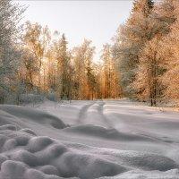 Утро в лесу... :: Александр Никитинский