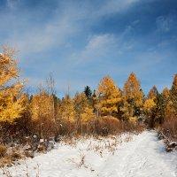 Поздняя осень, начало зимы :: Анатолий Иргл