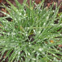Трава зимой. После дождичка. Четверг. :: Вячеслав Медведев