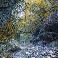 Утро в каньоне. :: Александр Криулин