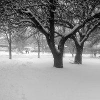 Деревья небеса подпирают кронами. :: Валентина ツ ღ✿ღ