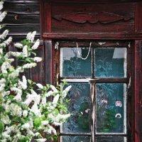 Томские окна :: Инна Сироткина
