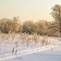 Иж зимой :: Олег Резенов