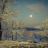 В лунную ночь :: galina tihonova