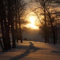 закат на лесной тропе :: Alexandr Staroverov