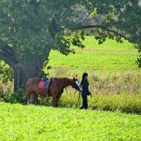 Девушка и лошадь :: Владимир Брагилевский