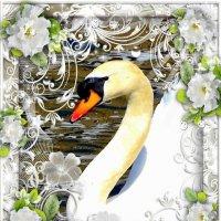 Лебедь :: Nina Yudicheva