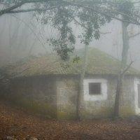 Порождение леса и тумана :: Сергей Яворский